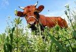 Правительство убедило сингапурскую Оlam инвестировать в животноводство 400 млн долларов