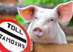 Россия готовит запрет на импорт свинины из Беларуси