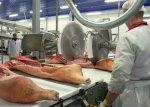Кубань констатировала нехватку местного сырья для мясокомбинатов