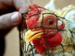 Российское птицеводство и овощеводство находятся в прямой зависимости от Евросоюза - эксперт