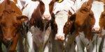 Россельхозбанк профинансировал строительство животноводческого комплекса в Тамбовской области