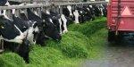 Продукция животноводства, полученная с применением ГМ-кормов, абсолютно безвредна