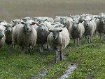 В Пензе наметили пути развития бройлерного овцеводства