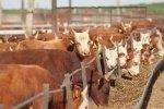 В Пензенской области восстановили более 85 заброшенных животноводческих помещений