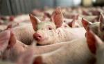 Бразилия стала основным поставщиком мяса на Камчатке