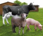 В Туве продолжается рост поголовья племенного скота