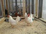Беларусь запретила ввоз птицы из Канады