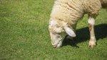 Война клонов: Европарламент не разрешил продажу мяса клонированных животных в ЕС