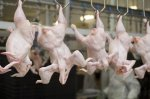 В I квартале производство мяса птицы в России увеличилось на 12,7% - исследование