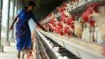 ВТО приняла решение в пользу США в споре об индийском запрете импорта птицы