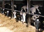 Животноводам Ростовской области компенсируют затраты на строительство ферм
