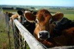 На Урале построят животноводческий комплекс мощностью до 45 тыс. тонн мяса в год