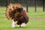 В Саратовской области в ноябре заработает на полную мощь новая птицефабрика