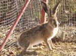 На Кубани серьёзно возьмутся за развитие кролиководства