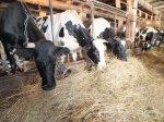 Господдержка донских фермеров увеличилась в четыре раза