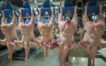 Астраханская область в 2015г увеличила производство курятины на 15%