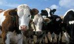 Еврокомиссия расследует сговор по ценам на скот во Франции