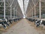 В Красноярском крае планируют построить 39 животноводческих объектов