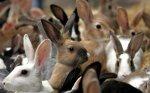 Краснодарский край: Убойный вопрос: что мешает альтернативному животноводству