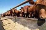 Ульяновских животноводов освободят от налога на имущество