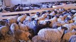 На развитие ферм в Ленобласти направлено более 100 млн рублей