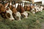 В Ивановской области растет производство мяса, молока и яиц