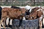 Мексика хочет поставлять в Россию говядину