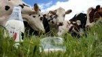 Во Франции начнут указывать происхождение молока и мяса на упаковках