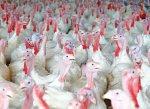 В Ингушетии построят птицекомплекс за 3,8 млрд рублей при участии КРСК