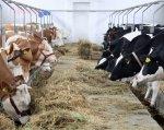 Мясное животноводство становится инвестиционно привлекательным