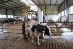 В сельхозорганизациях Иркутской области поголовье крупного рогатого скота сократилось на 4,1%