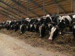 Выставка животноводов в Германии
