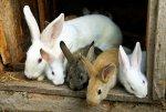 Рязанское хозяйство за год произвело 88 тонн кроличьего мяса