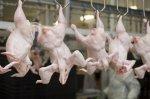 Россия в полном объеме удовлетворяет потребность в продукции птицеводства