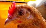 Минсельхозпрод Беларуси отменил запрет на ввоз птицы из ряда стран
