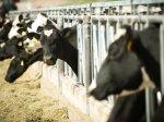 Мясо-молочный товарный комплекс появится в Нижегородской области