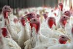 В Тюмени завершилось строительство крупнейшей птицефабрики