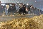 В Башкортостане продолжается кормозаготовка для скота