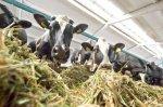 Под Калугой завершается строительство крупного животноводческого комплекса