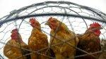 Производство и продажа мяса птицы в Тамбовской области выросли на 87%