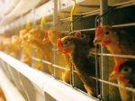 «Лето» инвестирует 2,2 млрд рублей в обанкротившуюся «Заокскую птицефабрику»