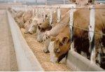 Непроданное зерно нужно направлять в животноводство, чтобы избавиться от излишков
