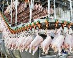 Производство мяса сократилось в Белгородской области