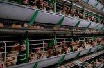 Россельхознадзор снял ограничения на ввоз мяса птицы из Польши