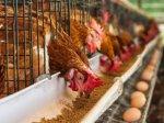 Власти Чукотки будут развивать сеть модульных птицефабрик.