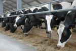 В Свердловской области открылся новый животноводческий комплекс