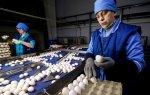 В Роскачестве дали рекомендации по выбору яиц в преддверии Пасхи